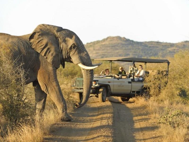 3 Rhulani Safari2