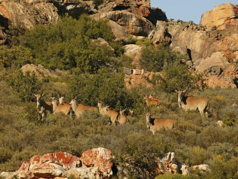 Bushman Wildlife_019_S
