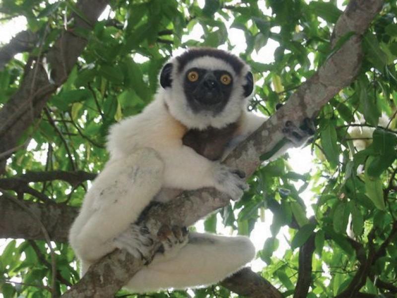 MADAGASCAR_LEMURI12