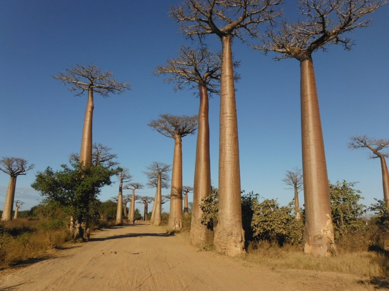 MADAGASCAR_MORONDAVA_baobab5