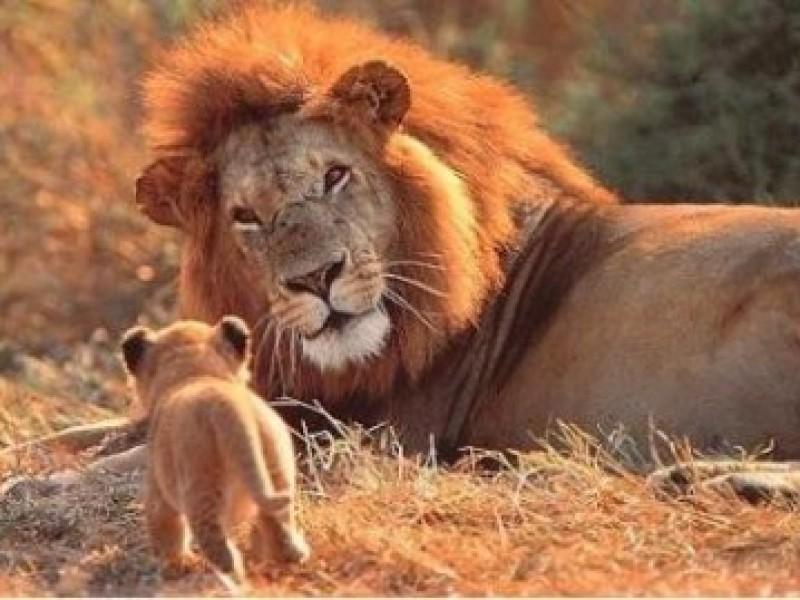 leone-1-sudafrica1